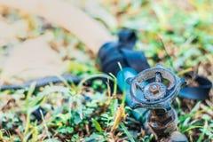 Bewässerung der Bäume im Garten lizenzfreie stockfotos
