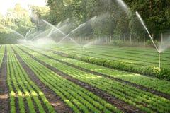 Bewässerung der Baumschulenplantage stockfotografie