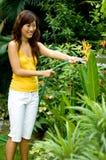 Bewässerung der Blumen lizenzfreies stockfoto