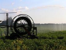 Bewässerung der Kartoffeln stockfoto