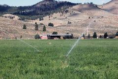 Bewässerung an der Ranch Lizenzfreie Stockbilder