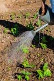 Bewässerung des Gemüsegartens Stockbilder