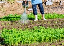 Bewässerung des Gemüsegartens Lizenzfreie Stockbilder
