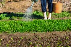 Bewässerung des Gemüsegartens Lizenzfreie Stockfotografie