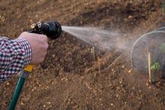 Bewässerung des Gemüses Stockfotos
