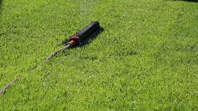 Bewässerung des grünen Grases auf dem Rasen stock video footage