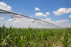 Bewässerung des Mais-Feldes stockfotos