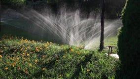 Bewässerung des Rasens stock footage