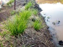 Bewässerung Dripper stockfoto
