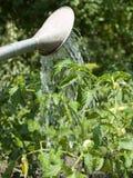 Bewässerung einer Anlage Stockfoto