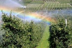Bewässerung eines Apfelobstgartens in heißem Italien Lizenzfreie Stockfotos