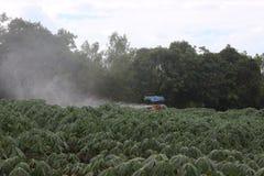 Bewässerung eines Maniokabauernhofes stockfotos