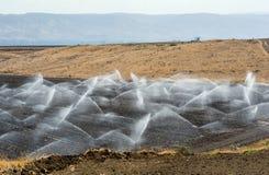 Bewässerung in Israel Stockbilder