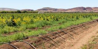 Bewässerung in Kununurra Lizenzfreie Stockfotos