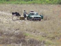 Bewässerung und die Kuh speisend Stockfotos