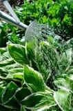 Bewässerungs-Dose stockfotos