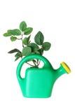 Bewässerungs-Dose und Blätter Lizenzfreie Stockbilder