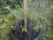 Bewässerungsanlage Stockfotografie