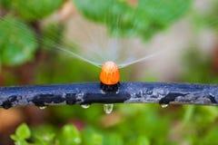 Bewässerungsanlagen und -gras durch Düse Stockfoto