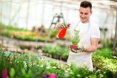 Bewässerungsbambus des Floristen im Gewächshaus Stockfoto