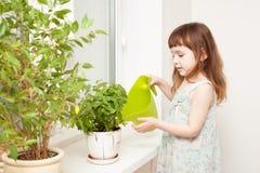 Bewässerungsbasilikum des Mädchens in einem Topf auf dem Fensterbrett lizenzfreies stockfoto