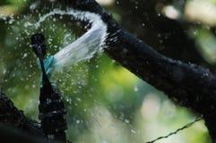 Bewässerungsberieselungsanlage Stockfoto