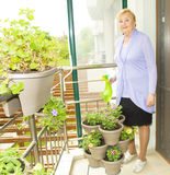 Bewässerungsblumen älterer Dame Stockfoto