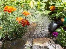 Bewässerungsblumen Stockfoto