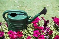 Bewässerungsblumen Stockfotos