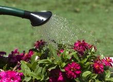 Bewässerungsblumen Lizenzfreie Stockfotos