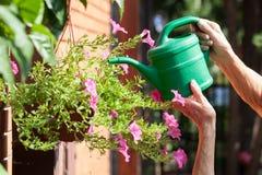 Bewässerungsblumen der älteren Frau Stockbilder