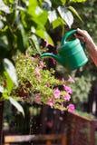Bewässerungsblumen der älteren Frau Lizenzfreie Stockfotos