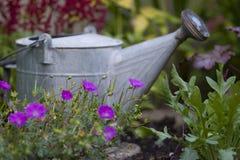 Bewässerungsdose   Stockfotos