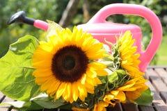 Bewässerungsdose mit Sonnenblume Lizenzfreie Stockfotos