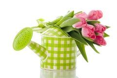 Bewässerungsdose mit Tulpen stockbild