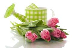 Bewässerungsdose mit Tulpen stockfotografie