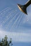 Bewässerungsdosenkopf Stockfoto