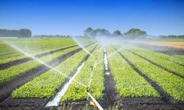 Bewässerungsernten Lizenzfreies Stockbild