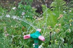 Bewässerungsgras der Gartenberieselungsanlage am sonnigen Tag und an den Tröpfchen des Wassers stockfotografie