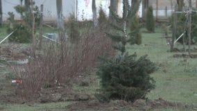 Bewässerungsgruben für das Pflanzen von Sämlingen eines Baums stock video