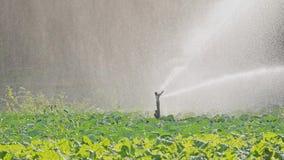 Bewässerungskohlplantage stock video footage