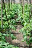 Bewässerungsschläuche Stockbild