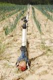 Bewässerungssystem Stockfoto