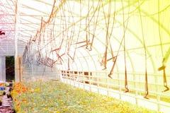 Bewässerungssystem auf einer industriellen Ebene in einem Gewächshaus, wachsende Anlagen stockfotografie