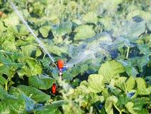 Bewässerungssystem bei der Funktionsbewässerung stockbilder