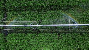 Bewässerungssystem in der Arbeit über ein Getreidefeld, in den schillernden Strahlen, Nahaufnahme, Draufsicht, Luftvideo ein bede stock footage