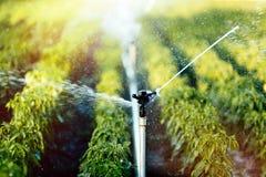 Bewässerungssystem in der Funktion lizenzfreie stockfotografie