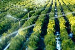 Bewässerungssystem in der Funktion stockfotografie