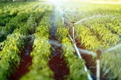 Bewässerungssystem in der Funktion lizenzfreie stockfotos