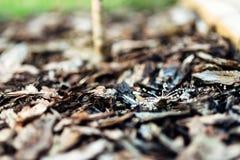 Bewässerungssystem für Bäume stockfotos